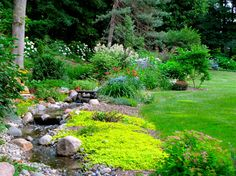 It's important to pop in varying shades of green around a backyard stream. Love the nearly flourescent chartreuse color.
