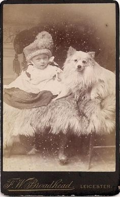 Lookalike Dog & Baby w/ Undereye Bags~Schipperke or Spitz~Antique CDV Photograph