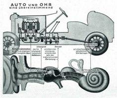 Kahn: Auto und Ohr