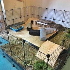 Indoor Rabbit Run, Rabbit Hutch Indoor, Bunny Cages, Rabbit Cages, Diy Bunny Toys, Rabbit Enclosure, Bunny Room, Pet Paradise, Rabbit Hutches