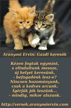Aranyosi Ervin: Gazdi ker Poems, Best Friends, About Me Blog, Health Fitness, Album, Animals, Schmuck, Figurative, Grumpy Kitty