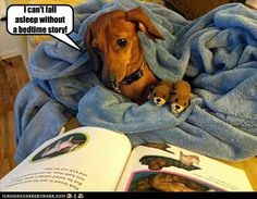 I Has A Hotdog - dachshund - Page 2 - Loldogs n Cute Puppies - funny dog pictures - Cheezburger