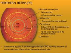 retina-and-layers-10-638.jpg (638×479)