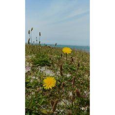 Good morning�� #제주 #길가 #들꽃 #날씨맑음 #여행사진 #jeju #island #roadside #flowers #sunnyday #nature #healing #landscape #domestic #travel #travelphoto #济州 #旅行 #風景 #チェジュ #りょこう #はやし #しぜん http://tipsrazzi.com/ipost/1526457042196574222/?code=BUvEJelBTAO