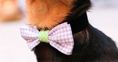 Dress codes don't apply to dogs. Still, your little one might enjoy the heart-melting power a bowtie earns him at the next dinner party—not to mention the extra treats. Follow these easy step...