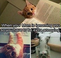 Funny Animal Pictures Of The Day - 24 Pics Funny Cute, Hilarious Animal Pictures, Funny Animal Humor, Cute Funny Animals, Cute Cats, Pics Of Kittens, Kittens Cutest, Cats And Kittens, Cat Humour