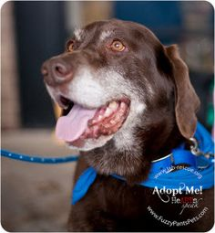 Elmer is a 10 year old neutered chocolate male looking for his new forever home