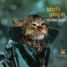 Beyond great - cats in famous album covers.