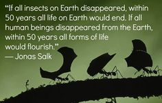 'If all insects on Earth disappeared, within 50 years all life on Earth would end. If all humans beings disappeared from the Earth within 50years all forms of life would flourish' Jonas Salk
