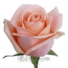 FiftyFlowers.com - Alejandra Perfect Peach Rose - 200 stems for $249.99