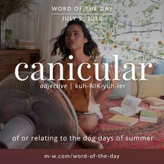 'Canicular' is the #wordoftheday.#language #merriamwebster #dictionary #summer #heatwave
