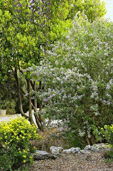 Advice on everything gardening Garden Shrubs, Garden Trees, Garden Landscaping, Landscape Design, Garden Design, Butterfly Bush, Hedges, Cottage Style, Outdoor Activities