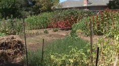 Proponents of biointensive gardening claim it could offer the answer to our ongoing food crises. It's certainly an impressive way to grow vast amounts of food.