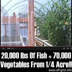 Please Share This Page: 20,000 lbs Of Fish + 70,000 Vegetables From 1/4 Acre!!Photo – http://www.youtube.com/watch?v=mCCN4nq7BlQ The development of the aquaponic farming system has been going on for over 40 years and is a super-efficient way to produce large amounts of home grown food by combining fish farming with hydroponic agriculture for up to ten [...]