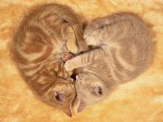 Cats (136 photos) (9)