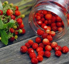 "Wild strawberries or ""smultron"". My absolute favourite berry!"