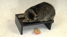 Cat Almighty: Amazing Spinning Top Play --  What will Cat Almighty do with always hiding spintop?