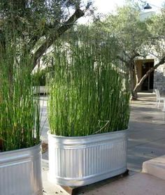 Get a bit of privacy without the cost of a fence by growing tall grass out of an aluminum tub. Use l... - Mom.me