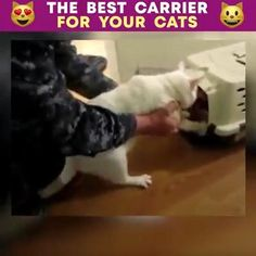 Cute Baby Animals, Animals And Pets, Funny Animals, Cute Cats, Funny Cats, Cat Carrier, Cat Accessories, Here Kitty Kitty, Funny Animal Videos