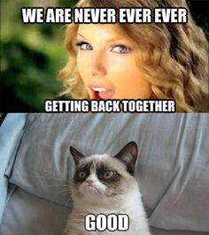 is listed (or ranked) 3 on the list The Best T. - How did they get together in t… is listed (or ranked) 3 on the list The Best T… - Grumpy Cat Quotes, Funny Grumpy Cat Memes, Cat Jokes, Crazy Funny Memes, Really Funny Memes, Funny Relatable Memes, Funny Cats, Funny Pictures Of Cats, Funny Animal Jokes