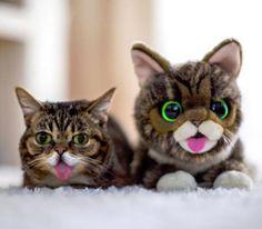 Lil Bub & her Lil Bub Plush Toy  l #doudou