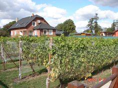 Naše vinice - Cerhenické Cuveé...
