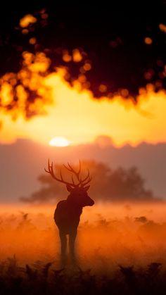 Elk animals iPhone 7 Wallpapers