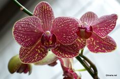 orchids.# favorite flowers ever
