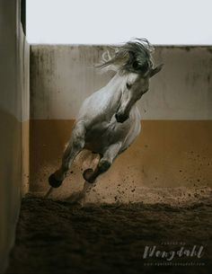 ❤️ Andalusian Horse, Spanish, Horses, Cute, Animals, Animales, Animaux, Kawaii, Spanish Language