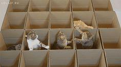 Gatos, bem alimentados que beleza