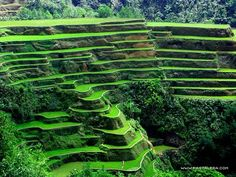 The Banaue Rice Terraces in the mountainous area of Ifugao province in the Philippines are amazing ancient cultural landscape . These anci. Beautiful World, Beautiful Places, Beautiful Scenery, Banaue Rice Terraces, Vietnam, Visit Philippines, Relax, Tourist Spots, Natural Wonders