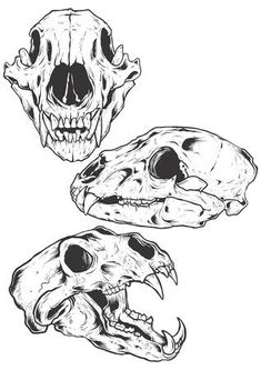 Bear Skulls vector illustration Illustration ,You can find Skull illustration and more on our website. Bear Skull, Dog Skull, Skull Art, Animal Skull Drawing, Animal Drawings, Animal Skeletons, Animal Skulls, Animal Skull Tattoos, Tattoo Ideas