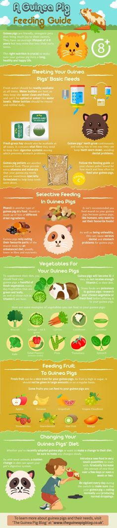Pets Care - Want to know more about the diet of guinea pigs or want a quick feeding guide to refer to? Here is our Guinea Pig Feeding Guide infographic. The way cats and dogs eat is related to their animal behavior and their different domestication process.
