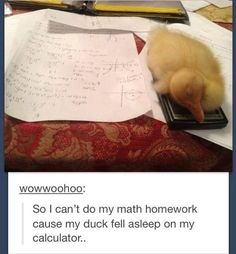 This little duck. | 23 Of The Cutest Things That Have Ever Happened On Tumblr