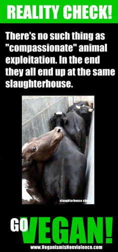 Animal abuse. Animal rights. Veganism.