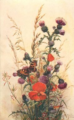 red poppy, thistles, grasses, butterfly on a flower