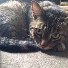 Lost Cat - Tabby - Toronto, ON, Canada M1N 3Y1