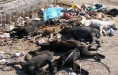 Save Romania's stray dogs now! - There are currently hundreds of Romanians stray Dogs in the streets of Craiova, Nasaud and Bucharest and it needs to stop NOW !!! There are so many Animal W...