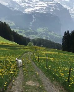 Walking through paradise 🏔 🐕 Wengen, Bern, Switzerland. Walking through paradise 🏔 🐕 Wengen, Bern, Switzerland. Places To Travel, Places To Visit, Nature Photography, Travel Photography, Nature Aesthetic, Destinations, Vacation Trips, Vacation Travel, Beautiful Landscapes