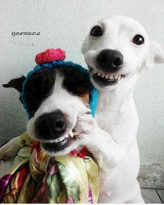 Sorri pra não perder o amigo!