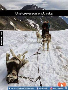 Funny pictures about Alaskan Flat Tire. Oh, and cool pics about Alaskan Flat Tire. Also, Alaskan Flat Tire photos. Funny Pictures With Captions, Picture Captions, Funny Animal Pictures, Hilarious Pictures, Funny Photos, Cute Animals With Funny Captions, Funniest Pictures, Clean Funny Pictures, Snow Pictures