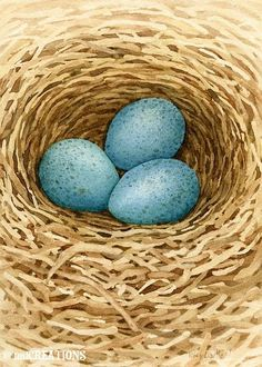 Robin Eggs In Nest - 5x7 archival watercolor print by Tracy Lizotte