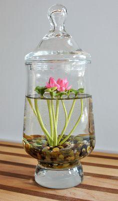 Mini Lotus Water Lily Terrarium in Recycled Glass A tiny 6980660331 b Indoor Water Garden, Indoor Plants, Indoor Flowers, Water Gardens, Garden Terrarium, Garden Plants, Water Terrarium, Hydroponic Gardening, Container Gardening