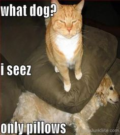 I Seez Only Pillows Funny Cat Photo