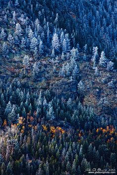 """""""An Early Winter Dusting""""    A dusting of snow and frost coats the Pine trees, mountains and forest during Autumn in Rocky Mountain National Park, Colorado  John De Bord Photography © 2012"""