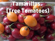 Tamarillo fruits are nutritious and healthy. They can be used for cooking, salads and making jams. Tomato Garden, Fruit Garden, Jam Recipes, Fruit Recipes, Tomato Chilli Jam, Tomato Salad Recipes, How To Make Jam, Exotic Fruit, Healthy Life
