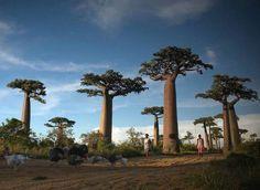 Bienvenue dans les 11 forêts les plus féériques du monde.