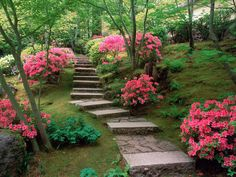 Beautiful garden with all the pink blooming plants...love this scene!!