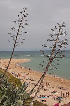 Canos de Meca  #Cádiz   www.restaurantecastillejos.es