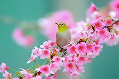White Eye by Dajan Chiou, via 500px